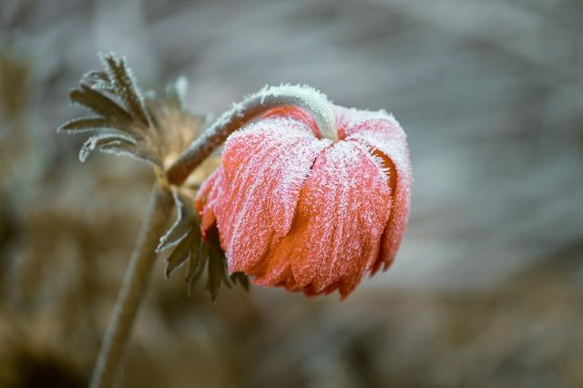 frozen-3840163_1920.jpg
