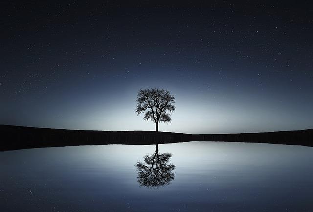 tree-736881_640.jpg